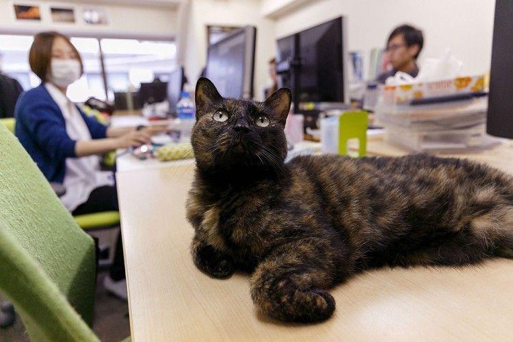 5 Perusahaan Ini Membolehkan Karyawan Bawa Hewan Peliharaan