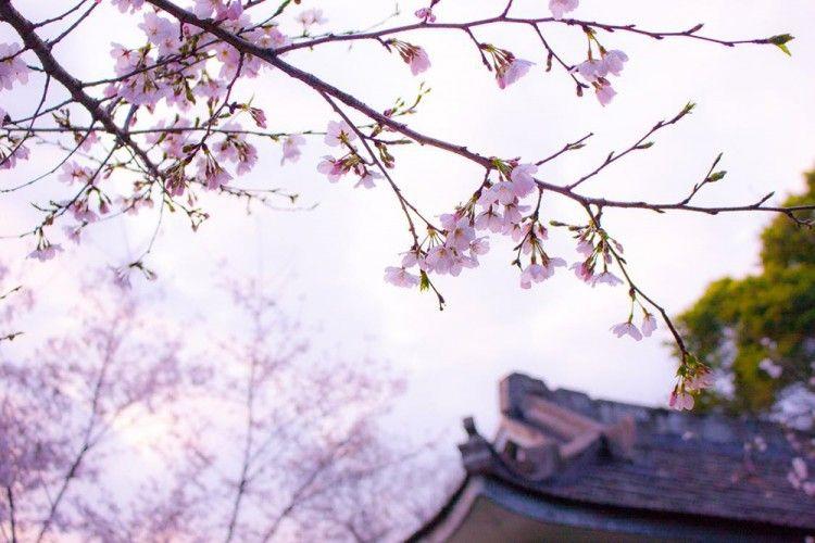 Rincian Biaya untuk Kamu yang Ingin Liburan Hemat ke Jepang!