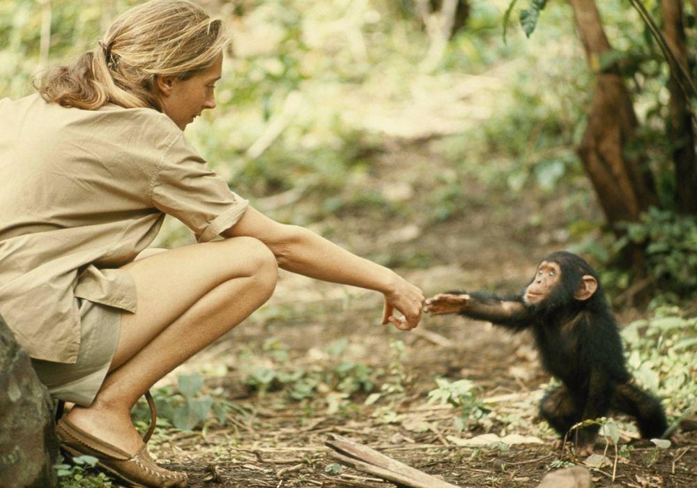 Belajar Sayangi Lingkungan dari Film War For The Planet of The Apes