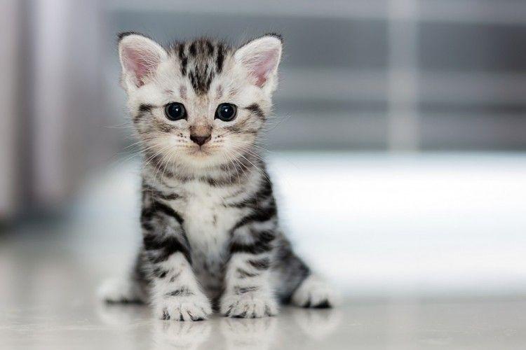 Download 98+  Gambar Kucing Gambar Kucing Gambar Kucing Paling Imut Gratis