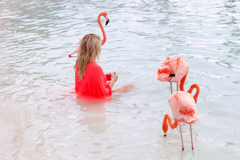 Asyiknya Bermain Bersama Flamingo di Pantai Pribadi Ini