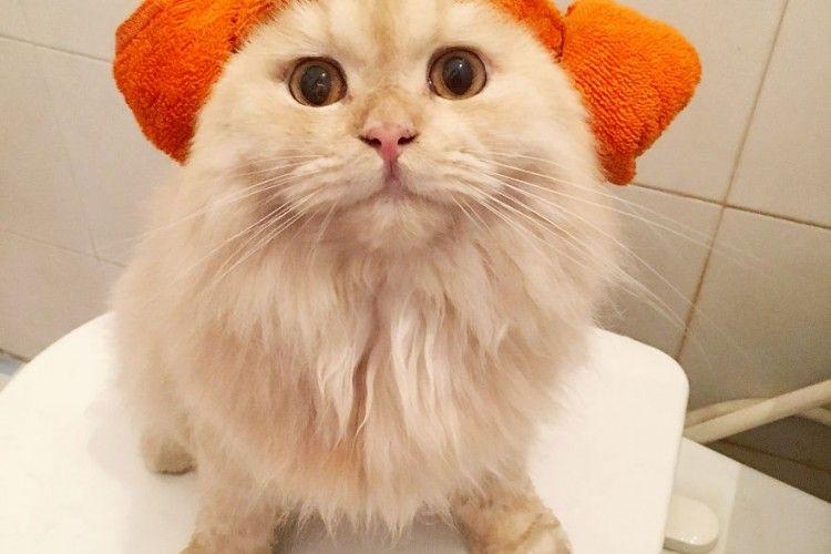 Yuk Kenalan Sama Meepo, Si Kucing yang Hobi Banget Mandi