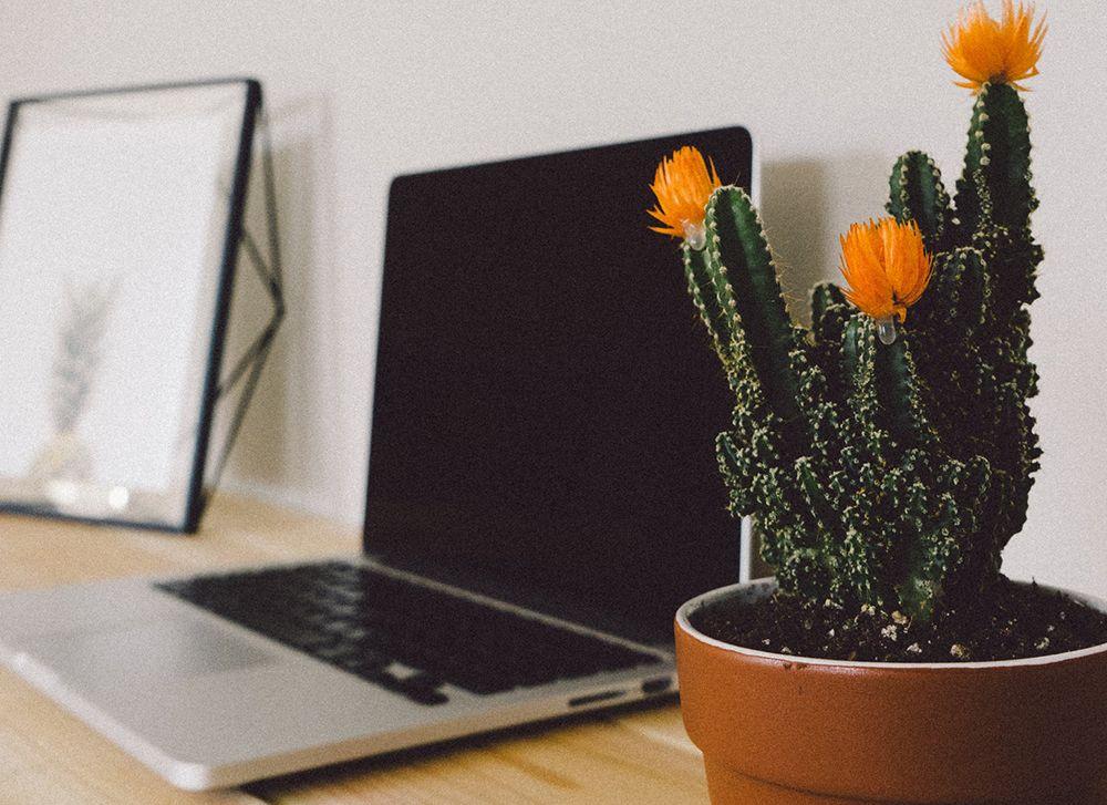 Ingin Punya Pekerjaan Sesuai Impian? Tetap Optimis Supaya Bisa Rasakan 3 Hal Ini