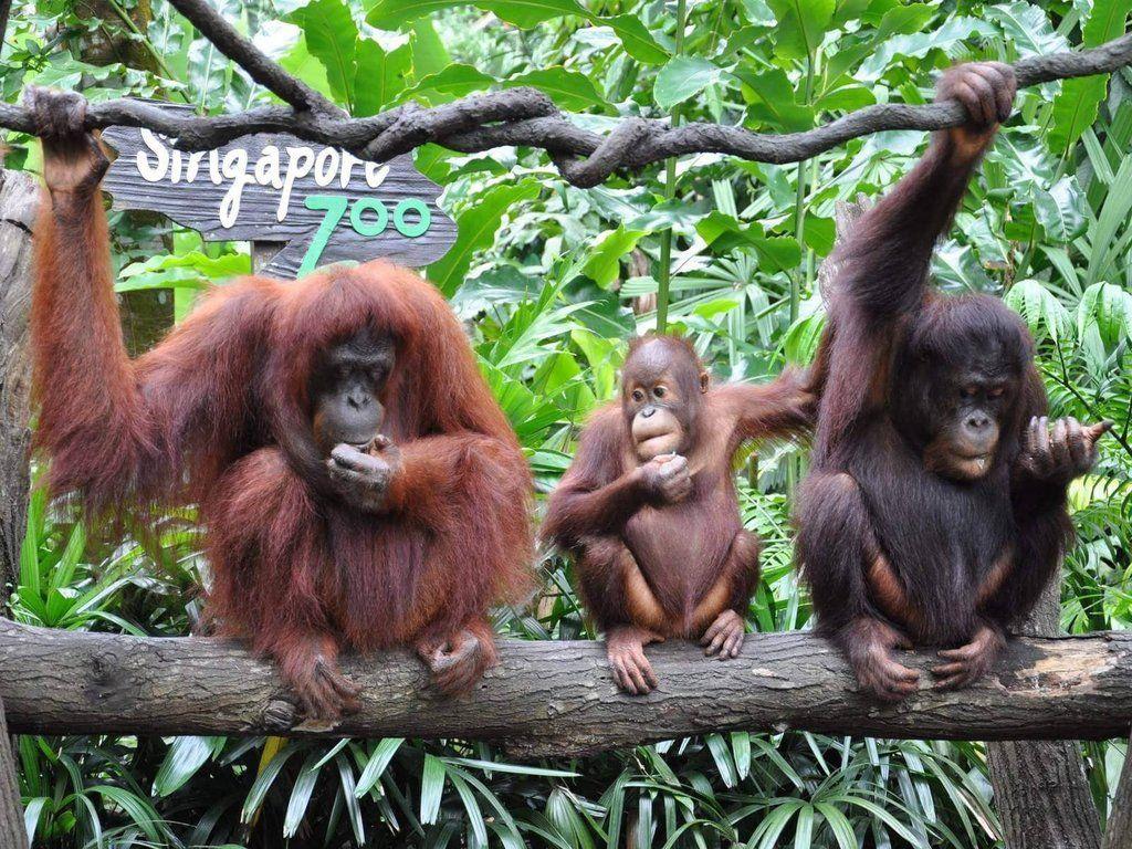 6 Kebun Binatang Ini Tercatat Jadi yang Terbaik di Dunia