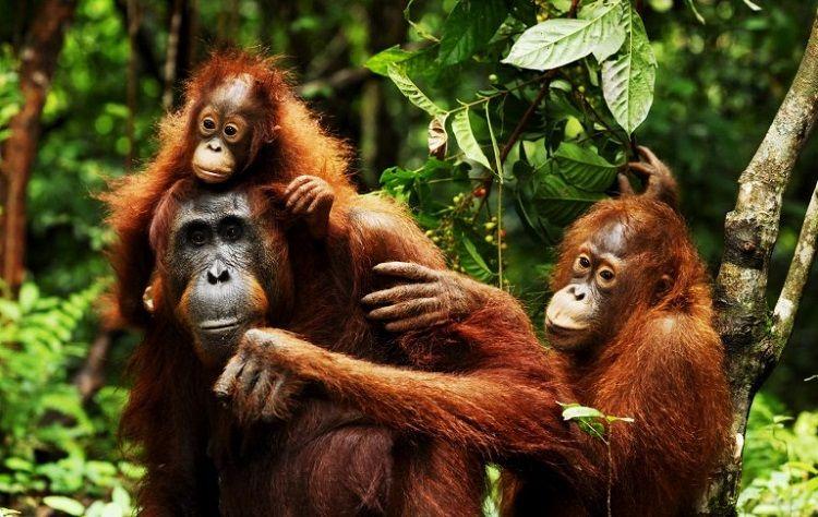 8 Destinasi Wisata di Indonesia Ini Jadi Favorit Turis Asing