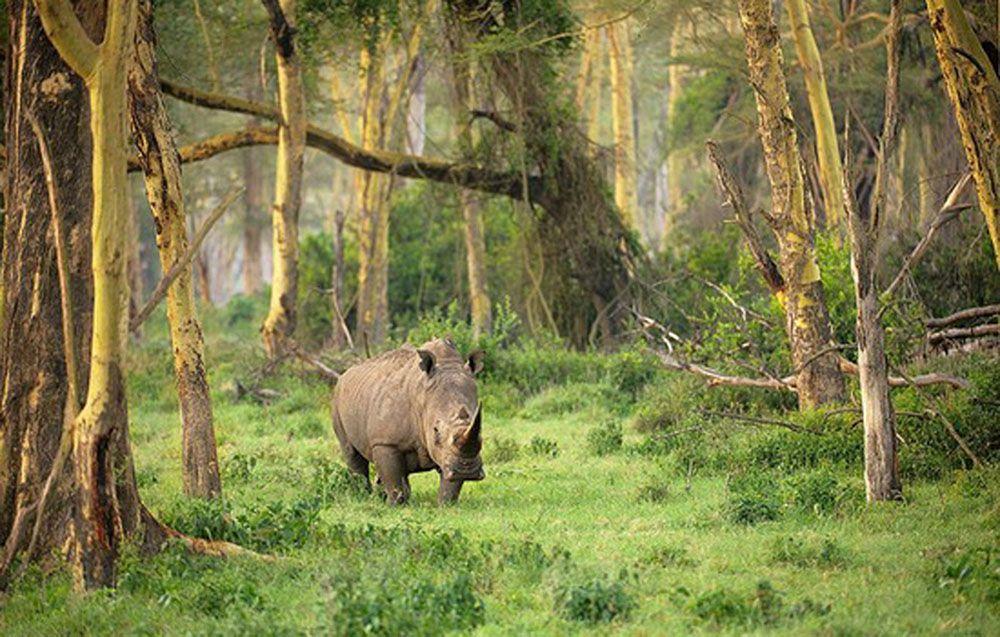 Takjub, 3 Taman Nasional Ini Lindungi Flora dan Fauna Langka