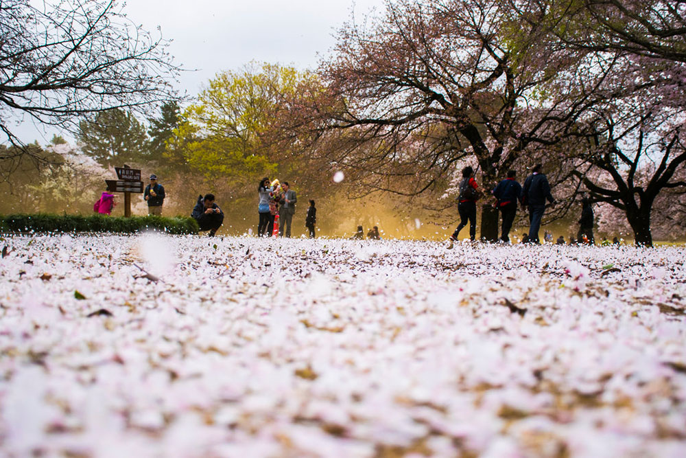 sakura-floor-by-moments-of-joy-d9wamyf-1e25c4784e468c0dfda16523252acbd0.jpg