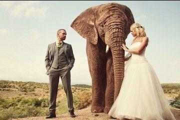 Bukan Rekayasa, Ini 10Sesi Foto Pernikahan Paling Berbahaya di Dunia
