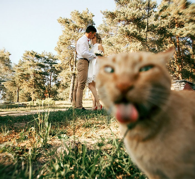 Lucu! 13 Photobomb Pernikahan Ini Bakal Bikin Kamu Tertawa