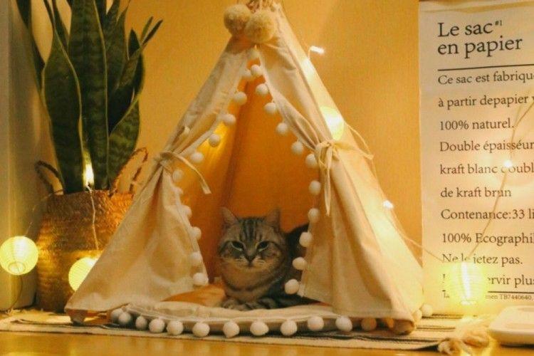 Desain Unik Tempat Tidur Kucing yang Bikin Mereka Betah!