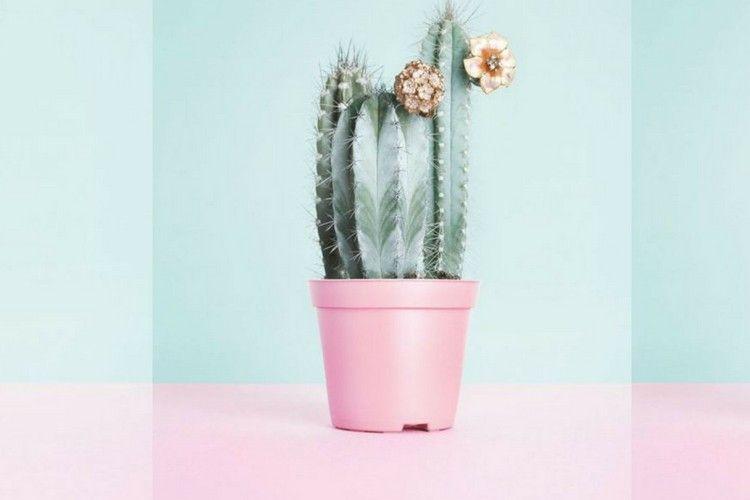Jadi Bahan Terbaru Produk Skincare, Ini Manfaat Kaktus untuk Kecantikan