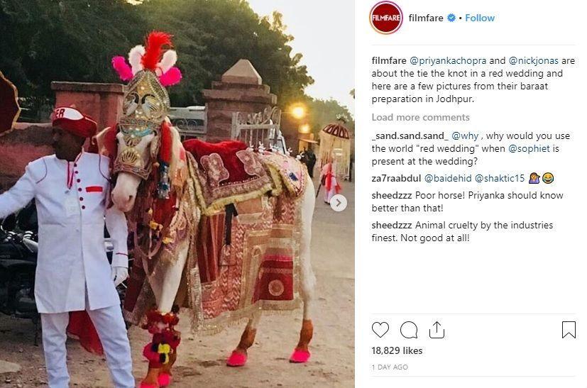 Baru Aja Nikah, Pernikahan Priyanka & Nick Dituduh Memperbudak Hewan