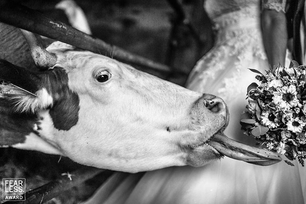 13 Foto Pernikahan Lucu Karya Fotografer Terbaik, Siap-Siap Tertawa!