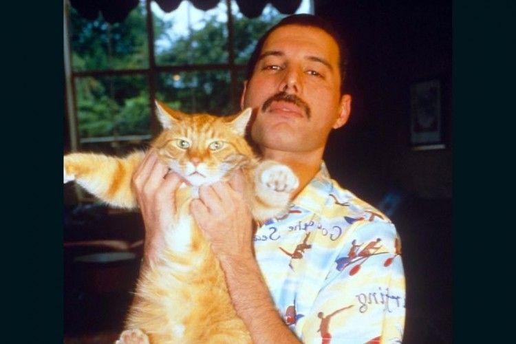 7 Fakta Kucing dalam Kehidupan Freddie Mercury Vokalis Queen