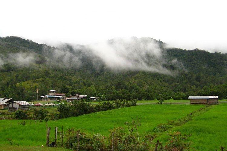 Pesta Beras Adan, Salah Satu Kebudayaan di Pulau Kalimantan