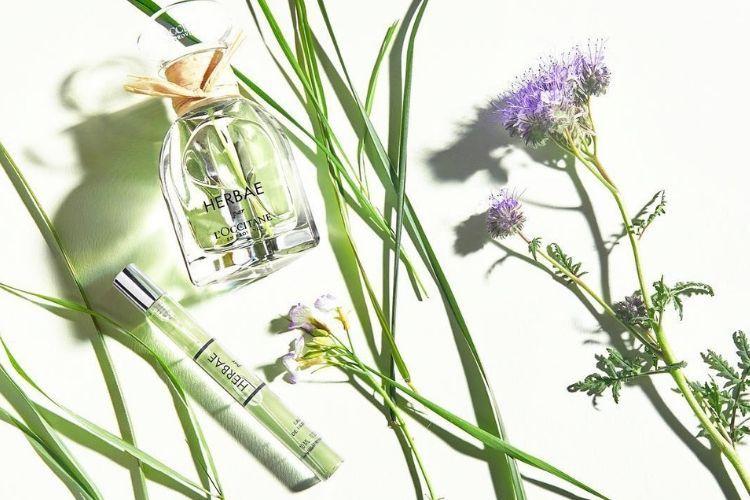 Merasakan Keharuman Alam dalam Rangkaian Produk Terbaru L'Occitane