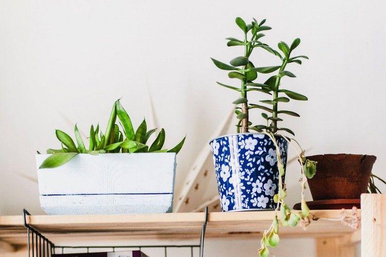 5 Jenis Tanaman Hias yang Populer dan Cocok Untuk Mempercantik Rumahmu
