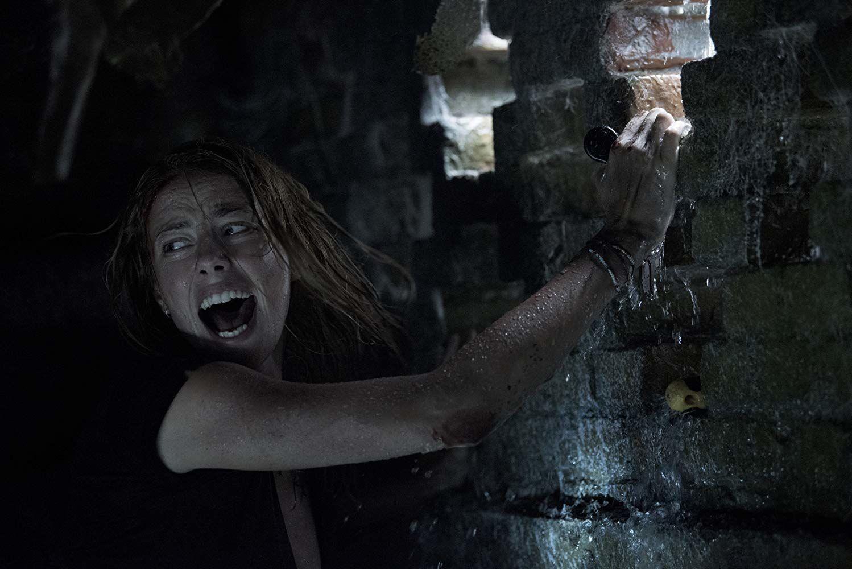 Sinopsis Film Crawl: Saat Rumahmu Menjadi Sarang Predator Terganas