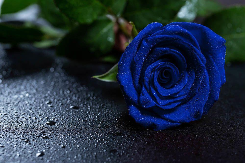 Arti Bunga Mawar Berdasarkan Warnanya
