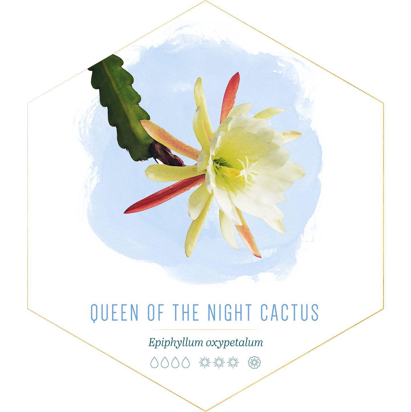 14 Jenis Tanaman Kaktus Hias untuk di Dalam Rumah