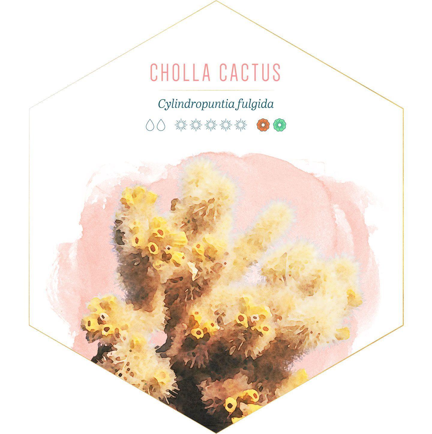 14 Jenis Tanaman Kaktus Hias yang Cantik