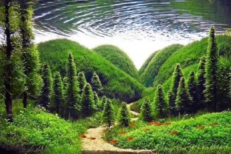 10 Jenis Tanaman Air Untuk Aquascape Yang Super Cantik