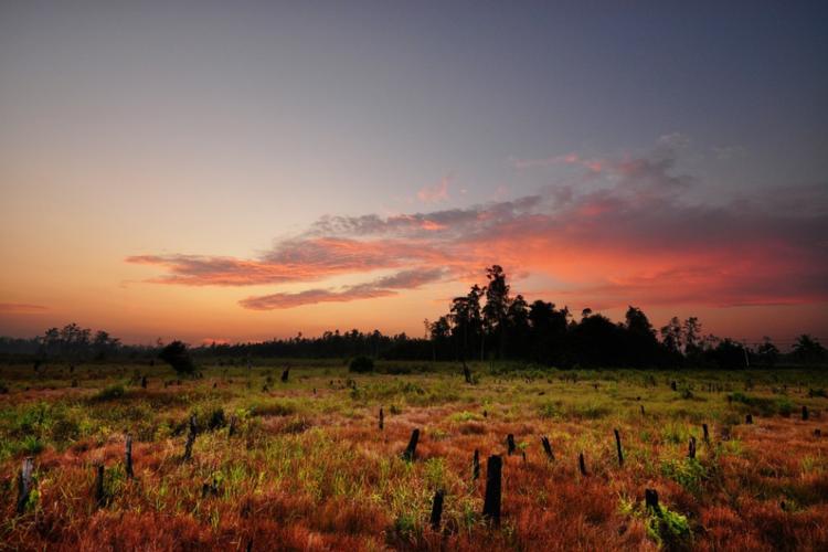 Fix! Ini Kata Jokowi Soal Ibu Kota Baru Indonesia di Kalimantan