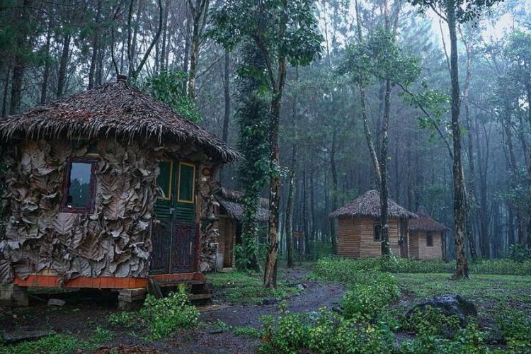 7 Fakta Wisata Rowo Bayu Banyuwangi