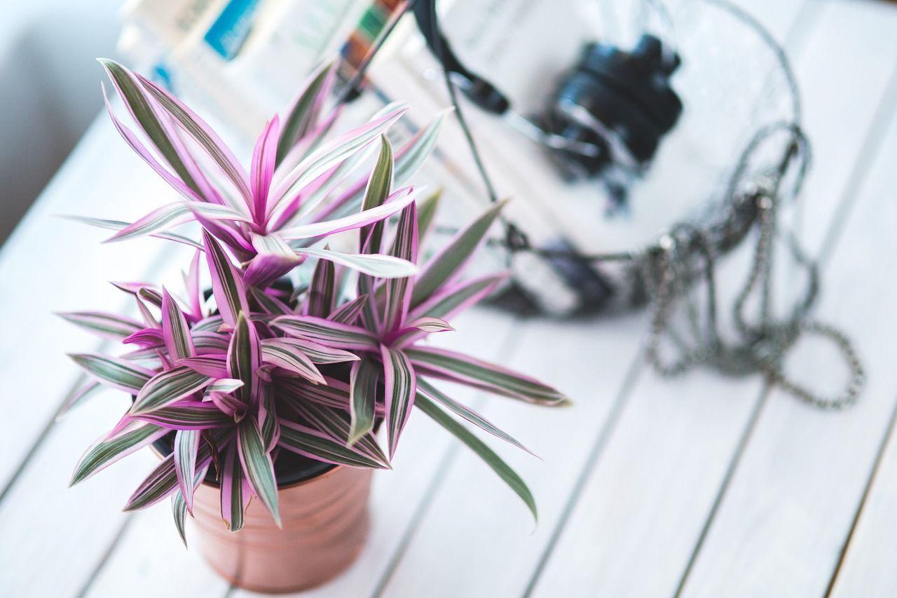 8 Tanaman Rumah Ini Bikin Bebas Polusi dan Bebas Stres
