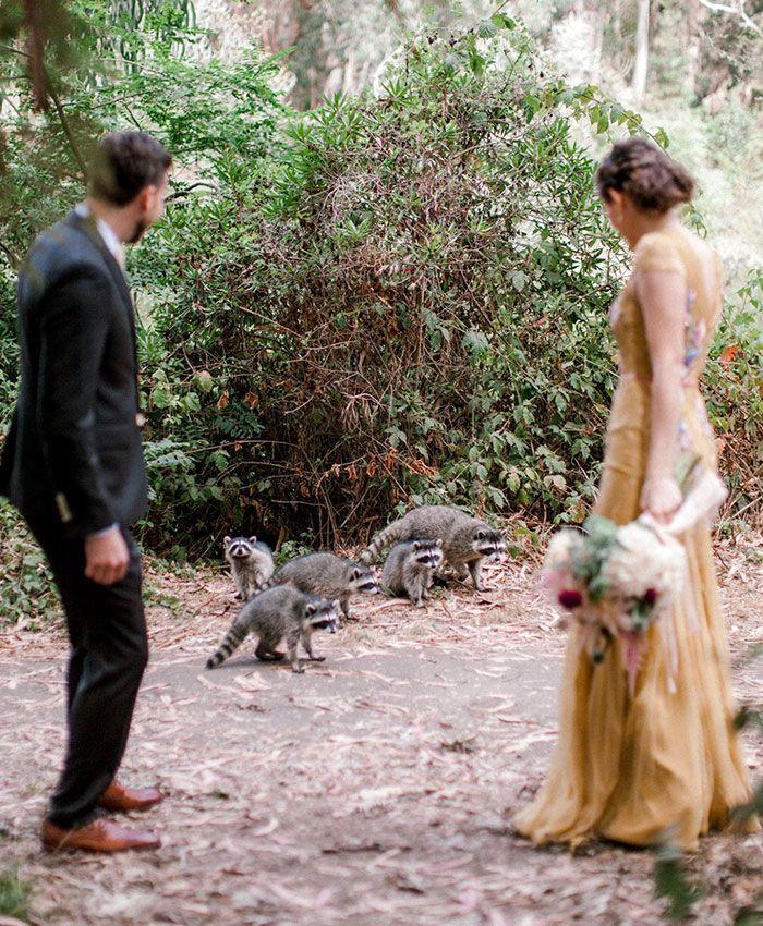 Diganggu Makhluk Liar, Sesi Foto Pernikahan Ini Mendadak Viral
