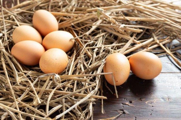 Rahasia Menyimpan Telur Tetap Segar