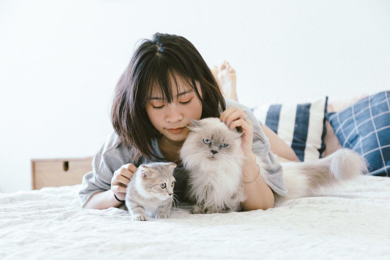 12 Tips Mudah Membersihkan Rumah Bagi Pemelihara Kucing dan Anjing
