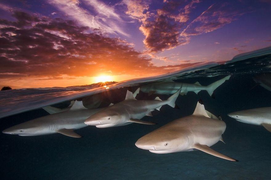 10 Foto Dalam Air yang Memukau, Bikin Merinding Lihatnya