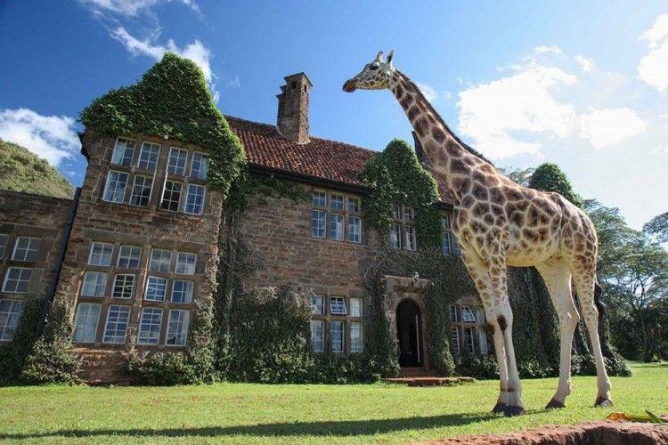 7 Hotel yang Membawa Suasana Alam ke Dalam Ruangan