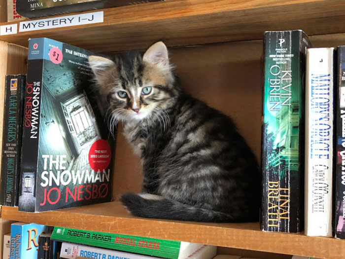 5 Fakta Serunya Membaca Buku Ditemani Kucing-Kucing Gemas di Kanada