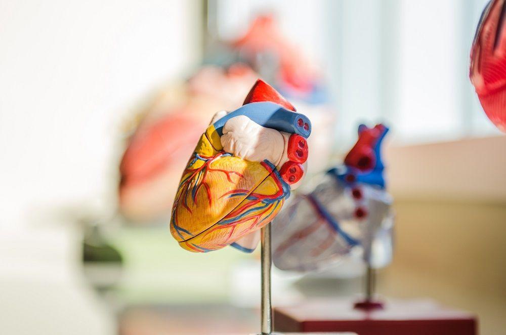 Adinia Wirasti Donor Kornea, Ini 9 Organ Yang Juga Bisa Kamu Donorkan
