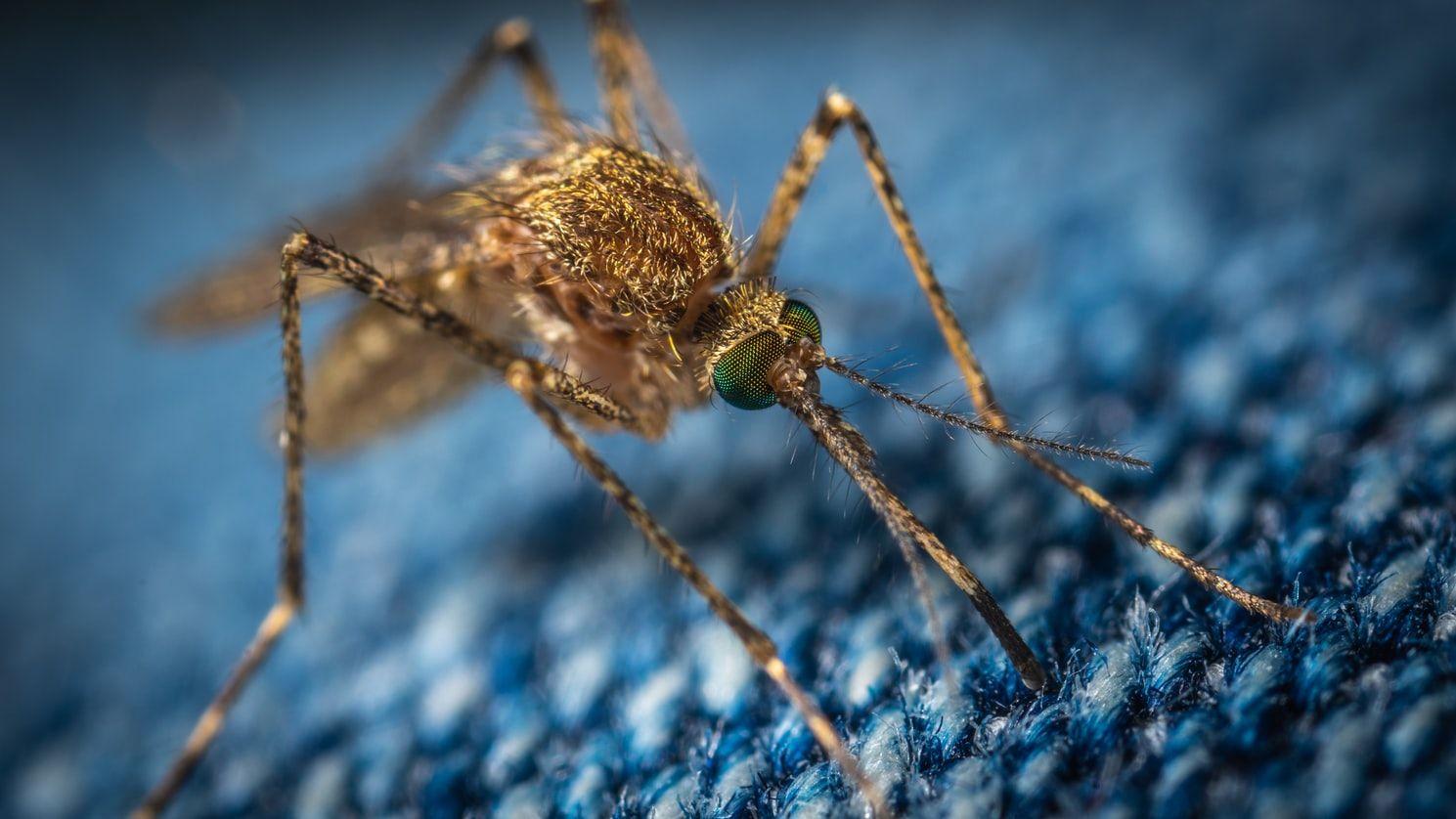 Bukan Cuma Corona, 8 Hewan Ini Pernah Bawa Virus Mematikan