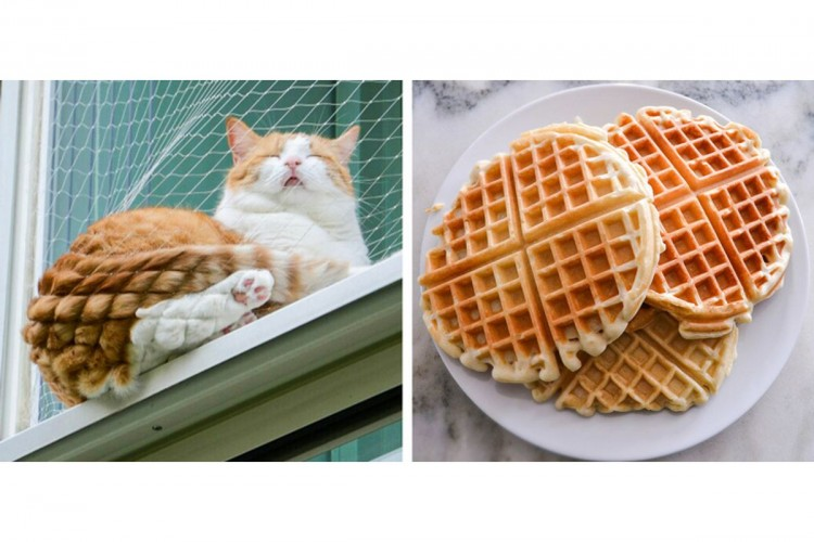 Menggemaskan! Inilah Potret Kucing yang Mirip dengan Makanan
