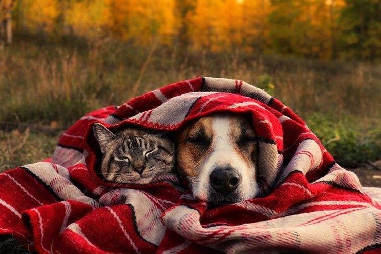 Potret Kucing dan Anjing yang Selalu Traveling Bersama