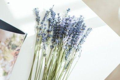 Bikin Ruangan Segar Wangi, Letakan 7 Tanaman Cantik Ini, Yuk