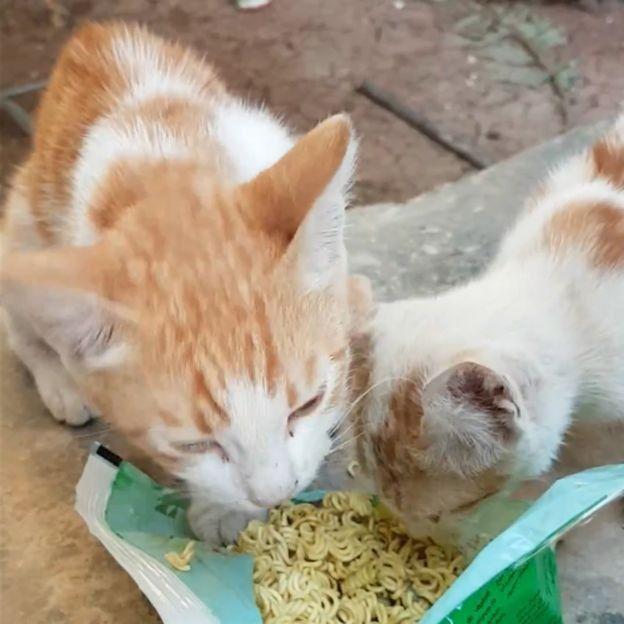 1 Rumah Punya 15, di Kota Ini Lebih Banyak Kucing Dibanding Manusianya
