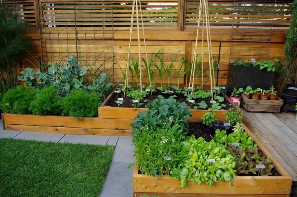 Ingin Berkebun Sayur di Rumah? Ini 8 Inspirasinya