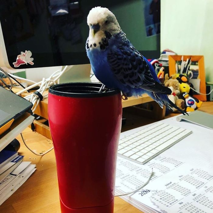 Gemas! Foto Binatang Sebagai 'Rekan Kerja' Ini Bikin WFH Nggak Konsen