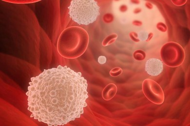 Leukosit Rendah Berikut Makanan Pembentukan Sel Darah Putih