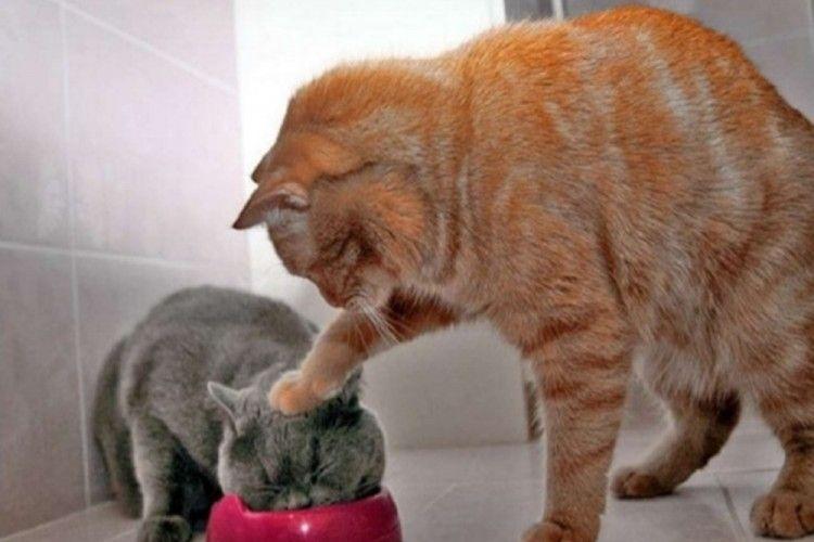 Gemas! Ini 12 Snapchat Lucu Saat Kucing Bertingkah