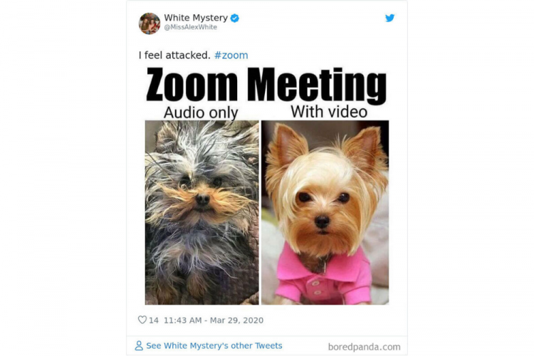10 Foto Lucu Realitas Tentang Pertemuan di Zoom