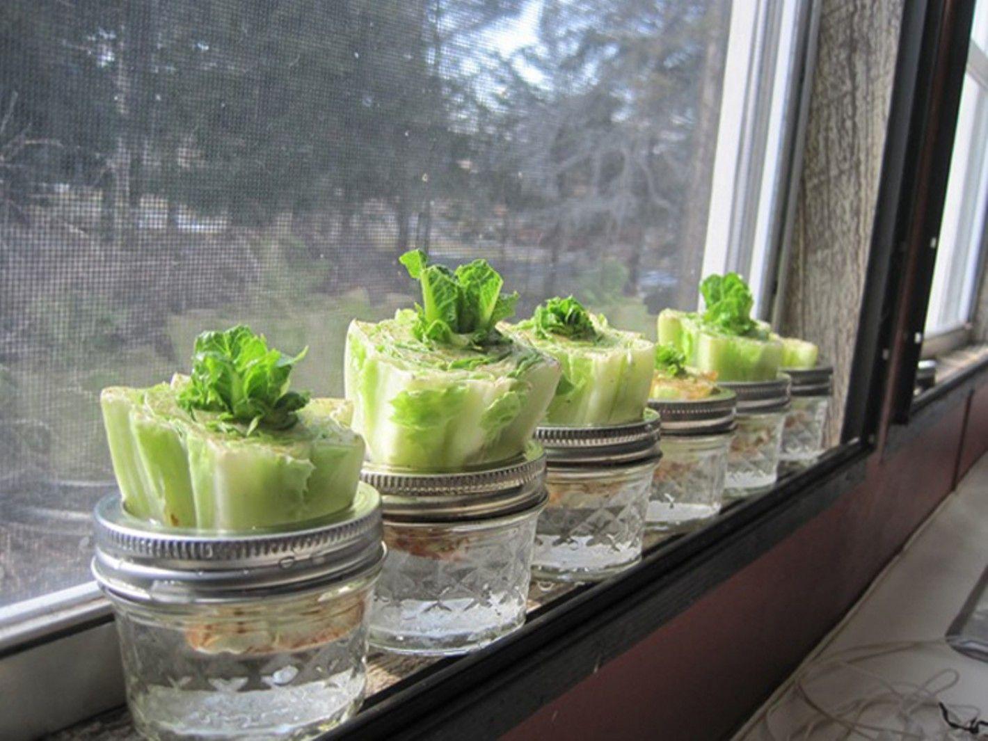 Belajar Berkebun Yuk! Sisa 8 Sayuran Ini Bisa Ditanam Lagi