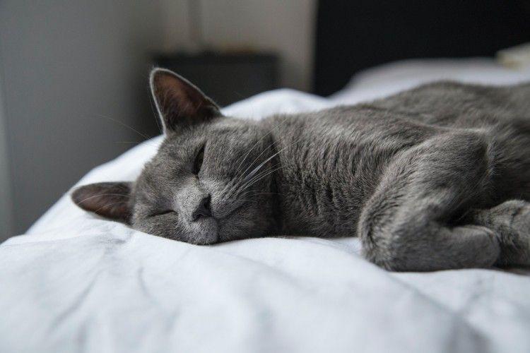 Mau Pelihara Kucing? Simak 12 Kucing Paling Langka di Dunia Ini Yuk!