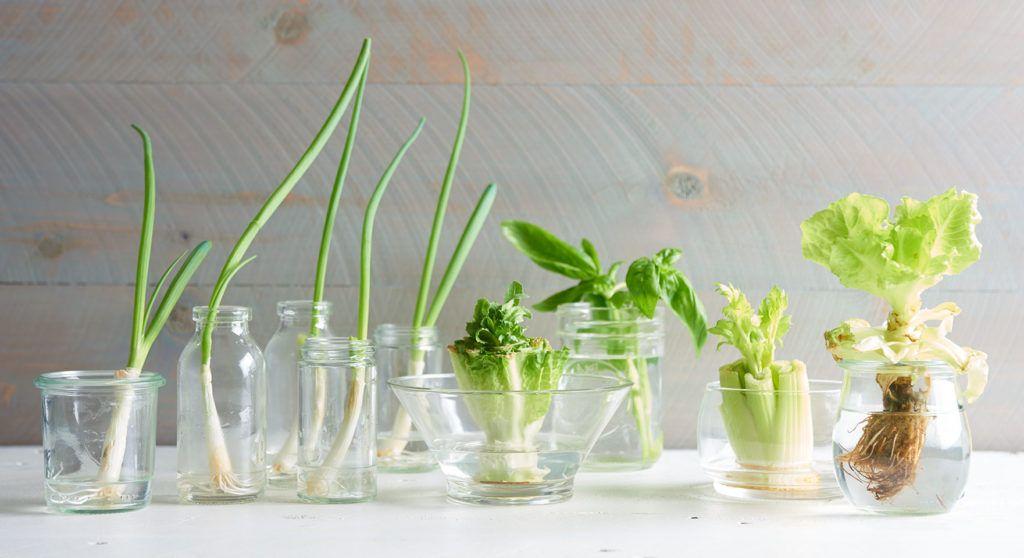 6 Kiat untuk Berhemat dengan Membuat Dapur Lebih Eco-Friendly