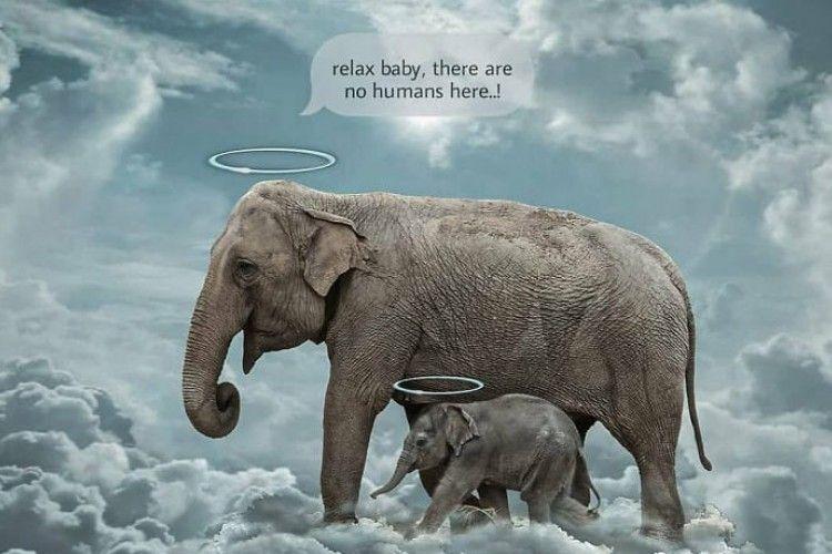 7 Ilustrasi Menyentuh Para Seniman untuk Kematian Gajah di Kerala